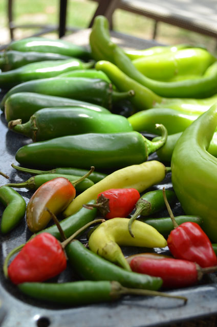 Hatch and Jalapeno Peppers
