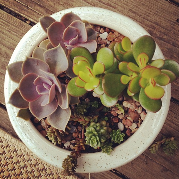 Good morning, pot of succulents