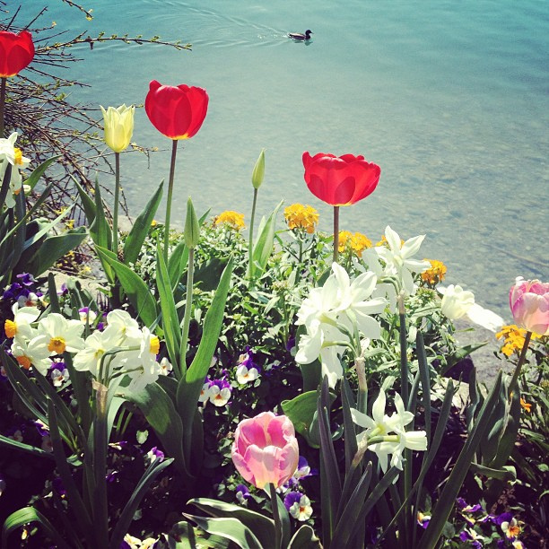 Spring flowers in Montreaux.