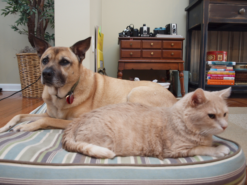Kyra Dog and Tito Cat, two of the sweetest senior pets I've had the pleasure of knowing. Photo courtesy of Sarah Kamalsky, Scissorina.com
